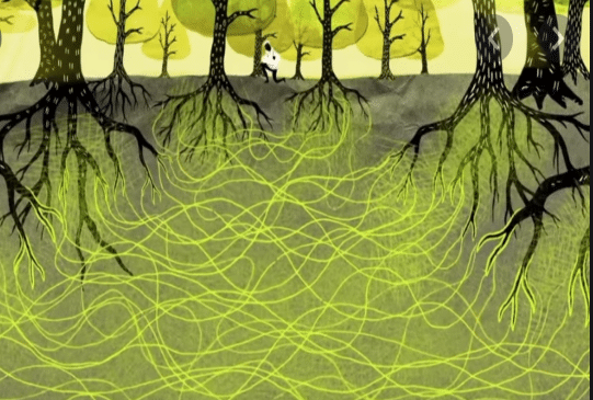 The Wood Wide Web